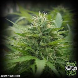 Durban Poison Regular Seeds
