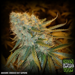 Akhishwe (Knocked Out) Supreme Feminised Seeds
