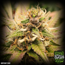 Birthday Cake Feminised Seeds