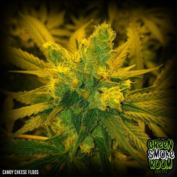 Candy Cheese Floss Feminised Seeds