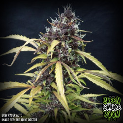 Easy Ryder Auto Feminised Seeds