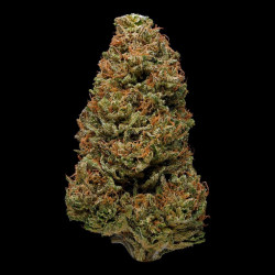 Harlequin Fast Feminised Seeds