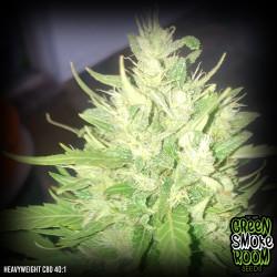 Heavyweight CBD 40:1 Feminised Seeds
