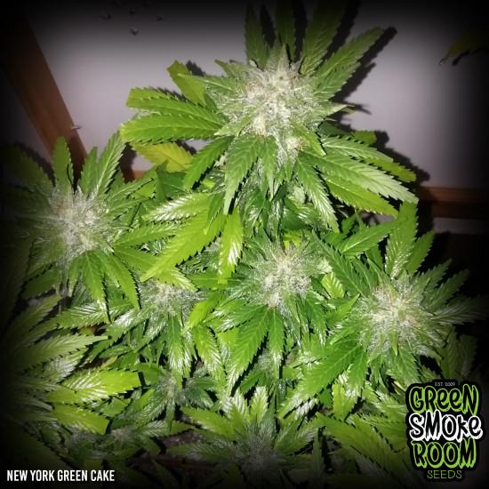 New York Green Cake Feminised Seeds