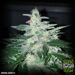 Original Skunk #1 Fast Feminised Seeds