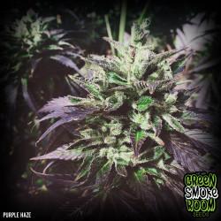 Purple Haze Feminised Seeds