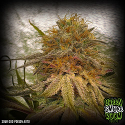 Sour Goo Poison Auto Feminised Seeds