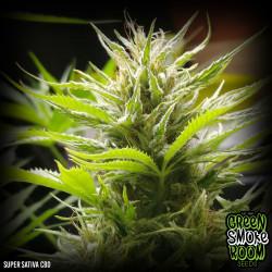 Super Sativa CBD 26:1 Feminised Seeds