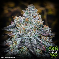 Super Sunset Sherbert Feminised Seeds