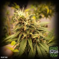 Velvet Bud Feminised Seeds