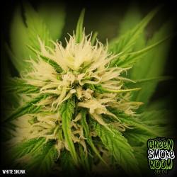 White Skunk #1 Feminised Seeds