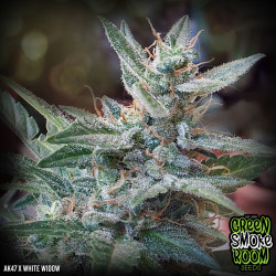 AK47 x White Widow Feminised Seeds