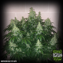 Northern Blue Tut Auto Feminised Seeds