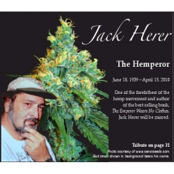 Jack Herer Fast Flowering Feminised Seeds