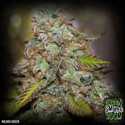 Mazari Green Feminised Seeds