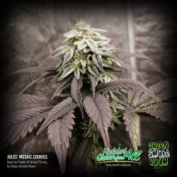 Jules' Mosaic Cookies Feminised Seeds