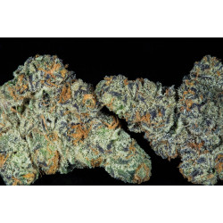 Do-Si-Dos Fast Feminised Seeds