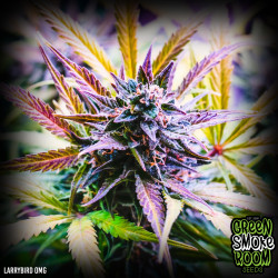 Larry Bird OMG Feminised Seeds