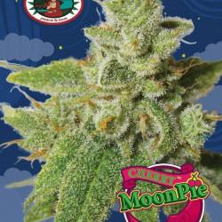 Cherry Moon Pie Feminised Seeds by Big Buddha Seeds