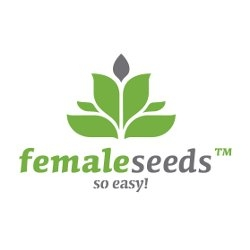 NL Auto Feminised Seeds