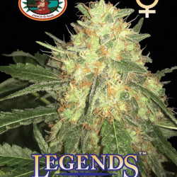 Legends Gold Feminised Seeds by Big Buddha Seeds