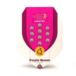 Purple Queen Feminised Seeds