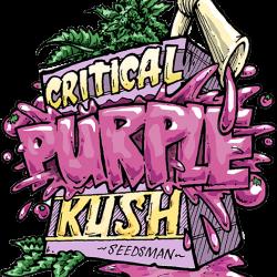 Critical Purple Kush Feminised Seeds