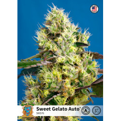 Sweet Gelato Auto Feminised Seeds