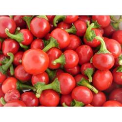 Iranian Cherry