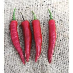Nanas Indian Red