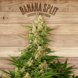 Banana Split Feminised Seeds