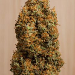Green Crack CBD Feminised Seeds