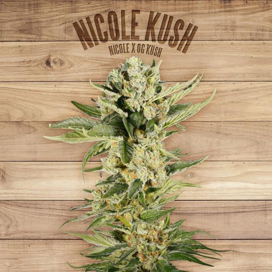 Nicole Kush Feminised Seeds