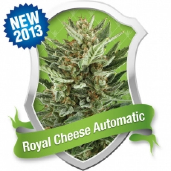 Royal Cheese Auto Feminised Seeds